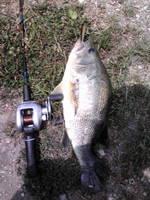 Bass2010_3